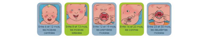 Poussée dentaire - Blog du dentiste pour enfants Adriana Agachi